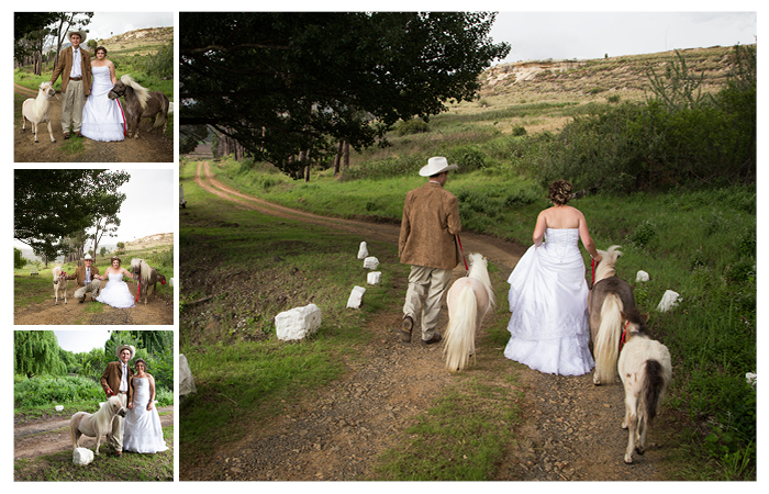 married couple photography at with miniature horses at Linwood Farm, Clarens